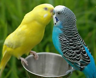 Зимний рацион птиц