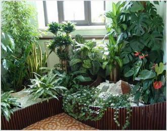 Растения для гармонии, любви, денег. Фэн-шуй растений
