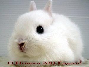 Поздравления c годом Кролика, Кота