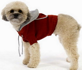 Одежда и обувь для собак - красиво, модно, комфортно