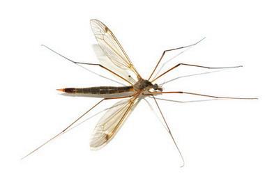 Укусы насекомых, как защитить