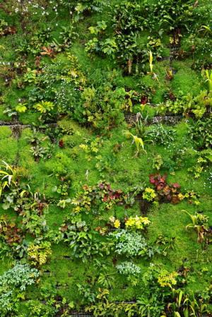 Вертикальный сад - живые стены