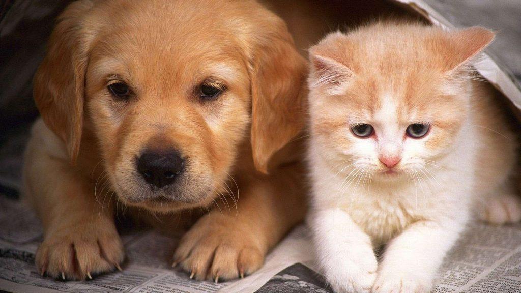 Стерилизация собак и кошек — забота или жестокость?