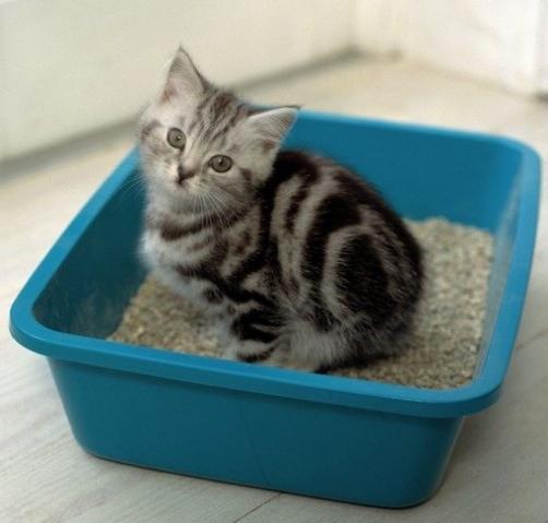 Какой наполнитель для туалета подойдет вашей кошке